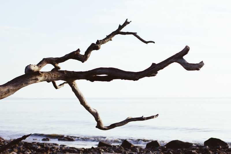 a bare tree branch on a beach